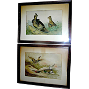 Pair of Antique prints by Alexander Pope Junior of game birds
