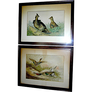 Antique matching prints by Alexander Pope of game birds, 19th c.
