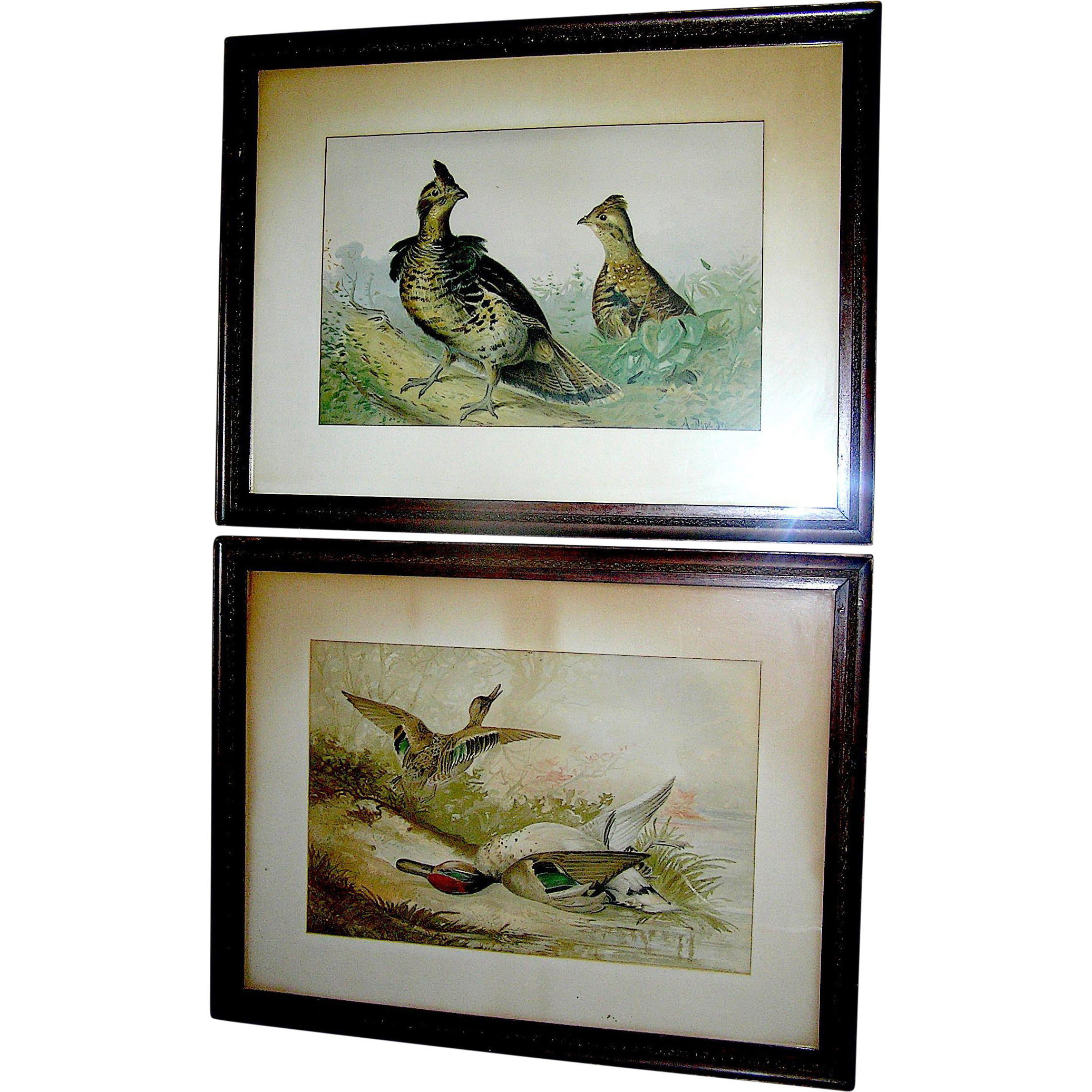 Pair - Antique prints by Alexander Pope Junior of game birds, 19th c.