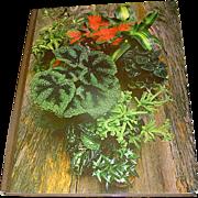 Vintage book, Foilage House Plants, Crockett, Time Life, 1972