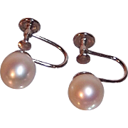 Classic Elegant 14K White Gold & Genuine Cultured Pearls Screw On Earrings Circa 1970's