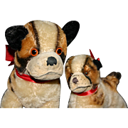 Steiff 1954 Bully and little Bully bull dog mohair Nice