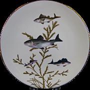 English Victorian Fish Plate #2  - Bodley - ca. 1880s