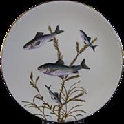 English Victorian Fish Plate #5 - Bodley - ca. 1880s