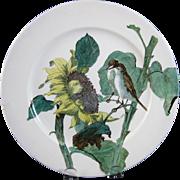 Victorian Brown Transferware Polychrome Doulton Plate - Birds & Sunflower 1883