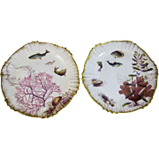 Pair of Victorian George Jones Aquatic Polychrome Plates - Seaweed, Shells & Fish - 1880s