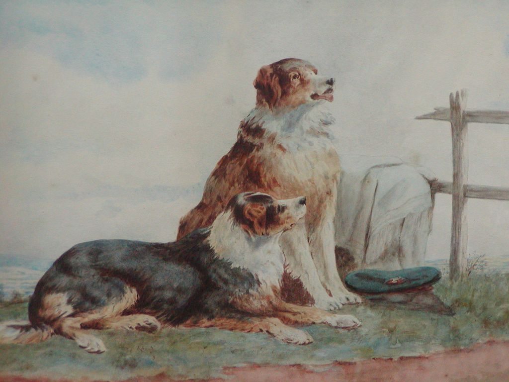 Collie dog painting....Painting of two Collie dogs....