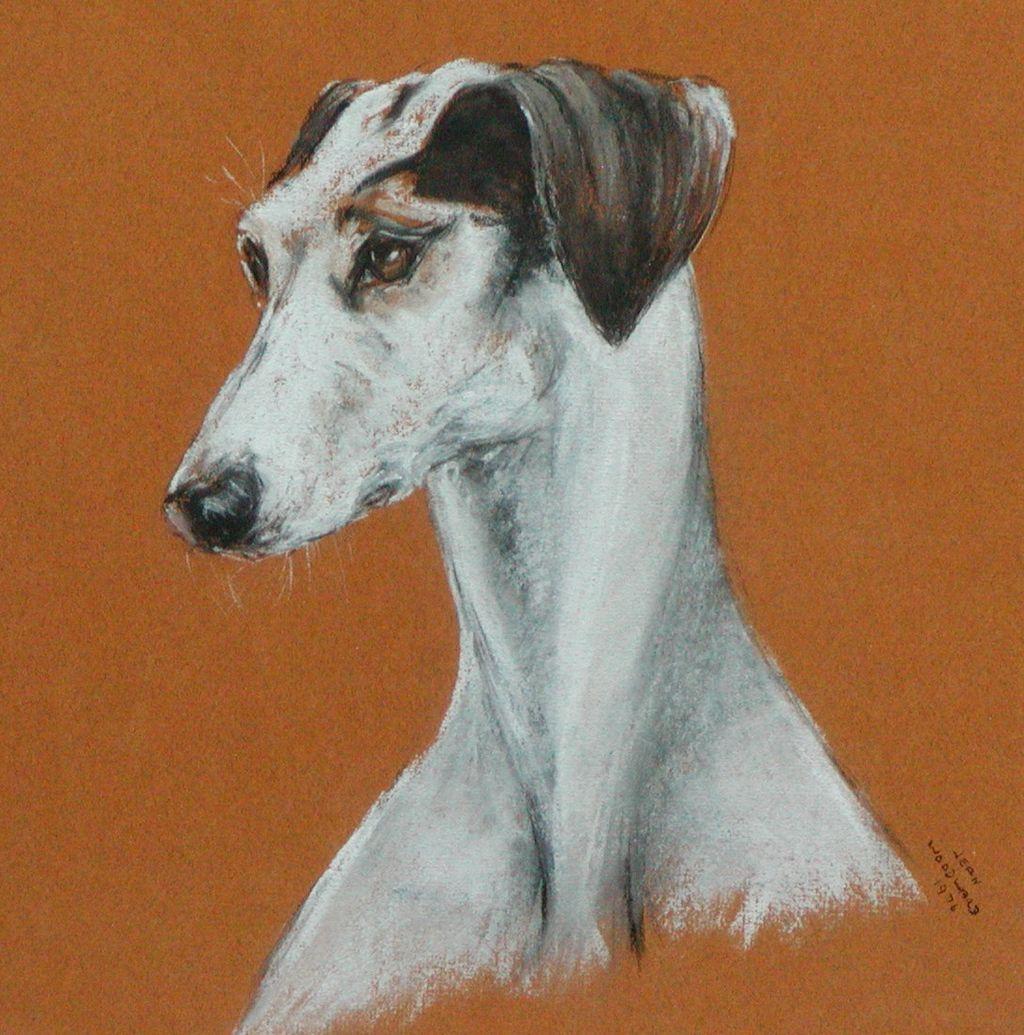 Painting of a Saluki dog...Saluki dog....