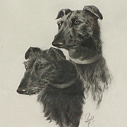 Two Wolfhound dogs..Charcoal drawing of two Wolfhound dogs....