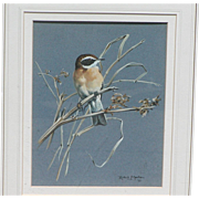Painting of a bird...Wild bird painting...Bird painting...