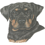 Rottweiler...Painting of a Rottweiler...Dog painting...