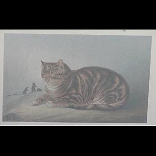 Baxter print...Cat print...Puss napping Baxter print...
