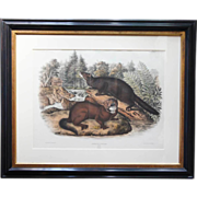 JOHN JAMES AUDUBON Colored Lithograph, Mink - Original