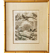 Johann Georg HECK Exotic Birds Engraving
