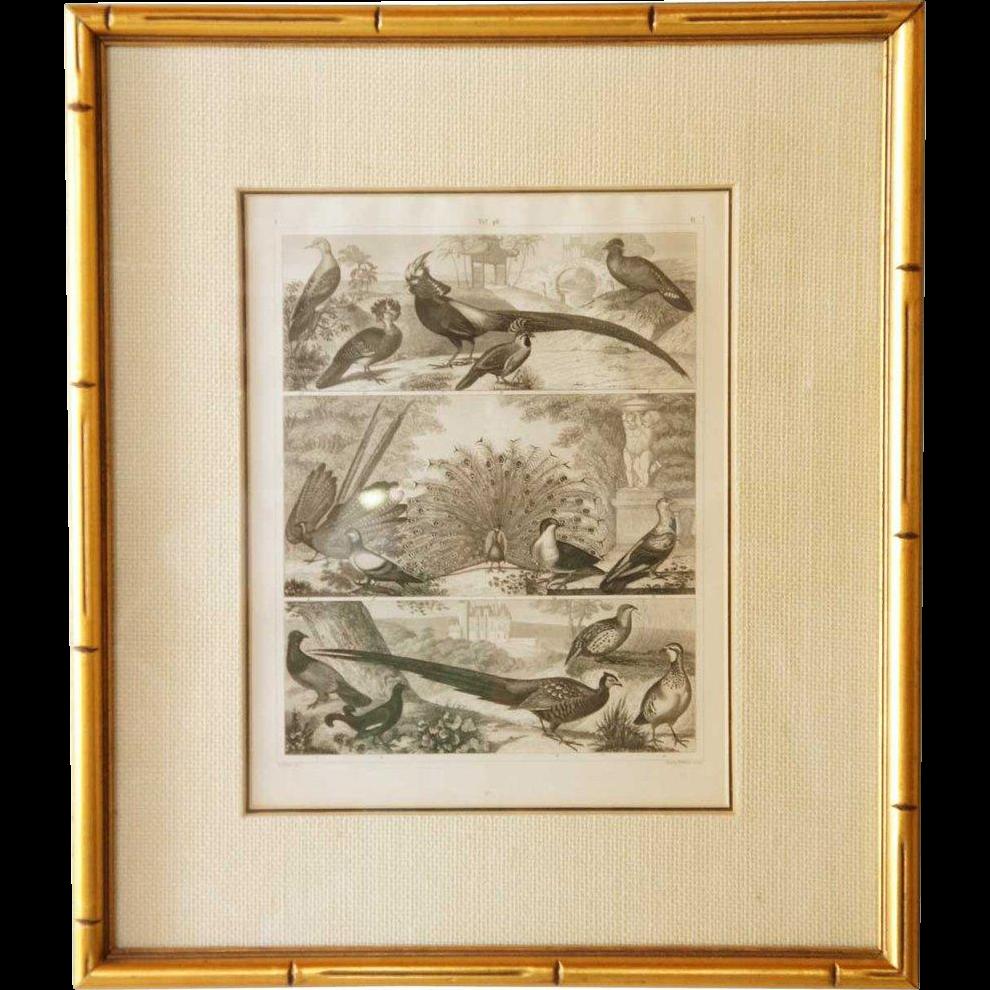 Johann Georg HECK Exotic Birds Engraving