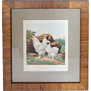 Pair of Silkies, English Chromolithograph from Cassell's Book of Poultry