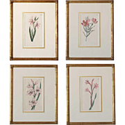 Set of Four English Hand Colored Engravings, Curtis Magazine Botanicals