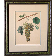 Belgian Color Chromolithograph, Fruit Botanical Study of Grapes, Annals of Belgian and Foreign Pomology