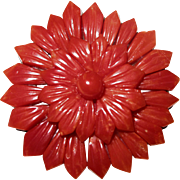 Oxblood Red Mediterranean Coral - Pin Brooch - Vintage & Large 1 1/2 inches