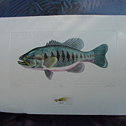 Dan Mitra Etching, Large Mouth Bass, Ltd. Ed. No. 100/350