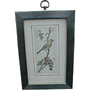 Striking Vintage Etching of Bird on Grape Vine
