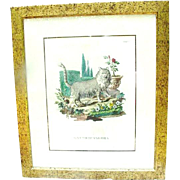 Early Hand-Colored Engraving of Cat, Gatto D'Angora, Italy