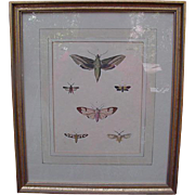 Hand-Colored Antique Chromolithographic Plate of Moths, French Matted & Framed