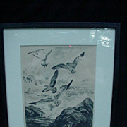 R.H. Palenske Etching, Gulls at Monterey, Reproduction from Brown & Bigelow Collection