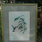Gould & Richter Hand-Color Hummingbird Print