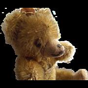 Tiny Mohair Bear, Glass Eyes, Hump