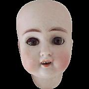 ABG Doll Head Sweet Nell 1362