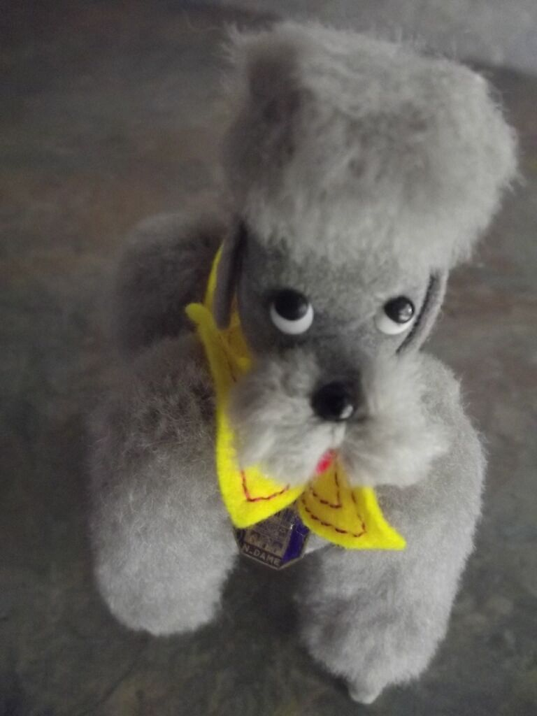 Googly Eyed French Poodle From France