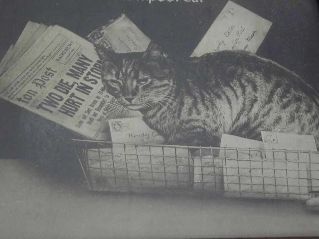 Picture of Hindy the Boston Post Cat, Mascot Newspaper Cat