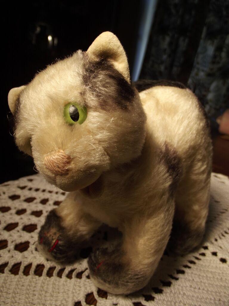 Gussy Type Cat