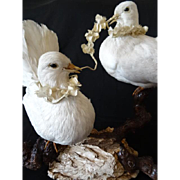 Delicious pair of vintage French decorative white taxidermy loving doves boudoir period display