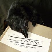 Delicious antique French black fox fur wrap : stole : muff in box : Maison Delion Paris