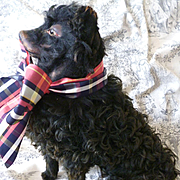 Rare old French pajama dog : sitting position : black curly coat : antique doll companion