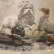 Charming 19th C. French lithograph : etude 4 dogs : italian greyhound : spaniel : bichon