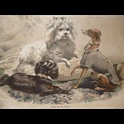Charming 19th C. French lithograph : etude 4 dogs : italian greyhound : spaniel : bichon