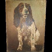 Old portrait painting Springer Spaniel dog : oil on canvas