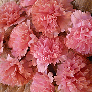 Superb batch old French handmade wired pink waxed paper carnation flowers : old stock