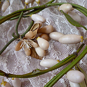 Antique French bridal wax bud garlands : brooch & button hole : doll projects