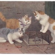 Artist signed KITTEN 3 CATS postcard 1905 German printed