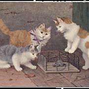Artist signed KITTEN 3 CATS postcard 1905 German printed