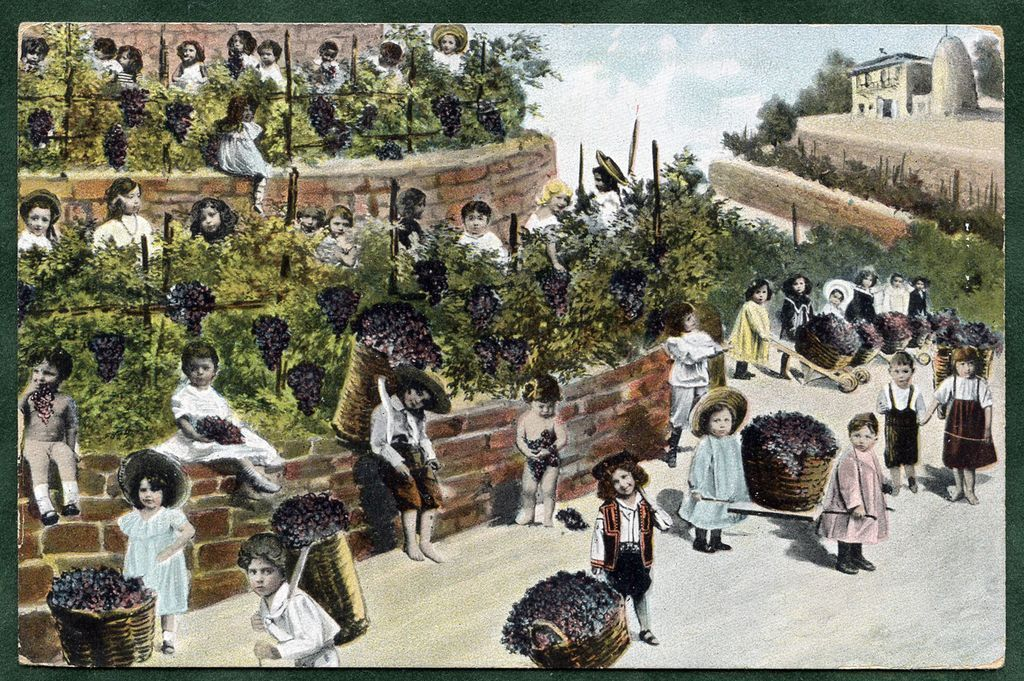 Grape Harvest No. 2 Multiple BABIES Chromolithograph Postcard