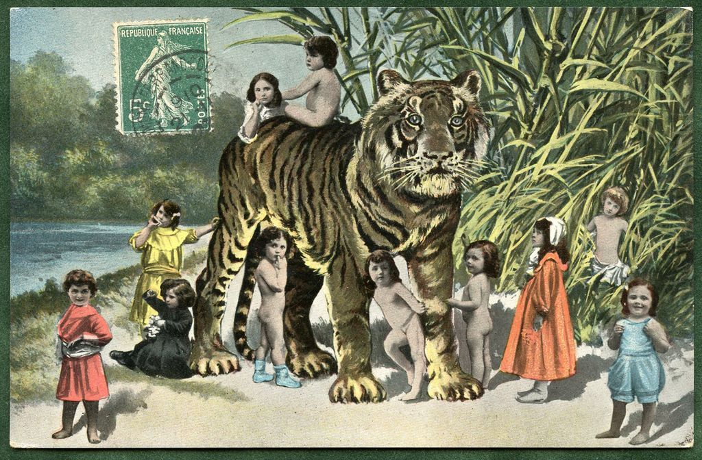 TIGER with Multiple BABIES  Antique German Postcard