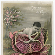 Cabbage Patch Baby Antique French postcard Graine de Chou