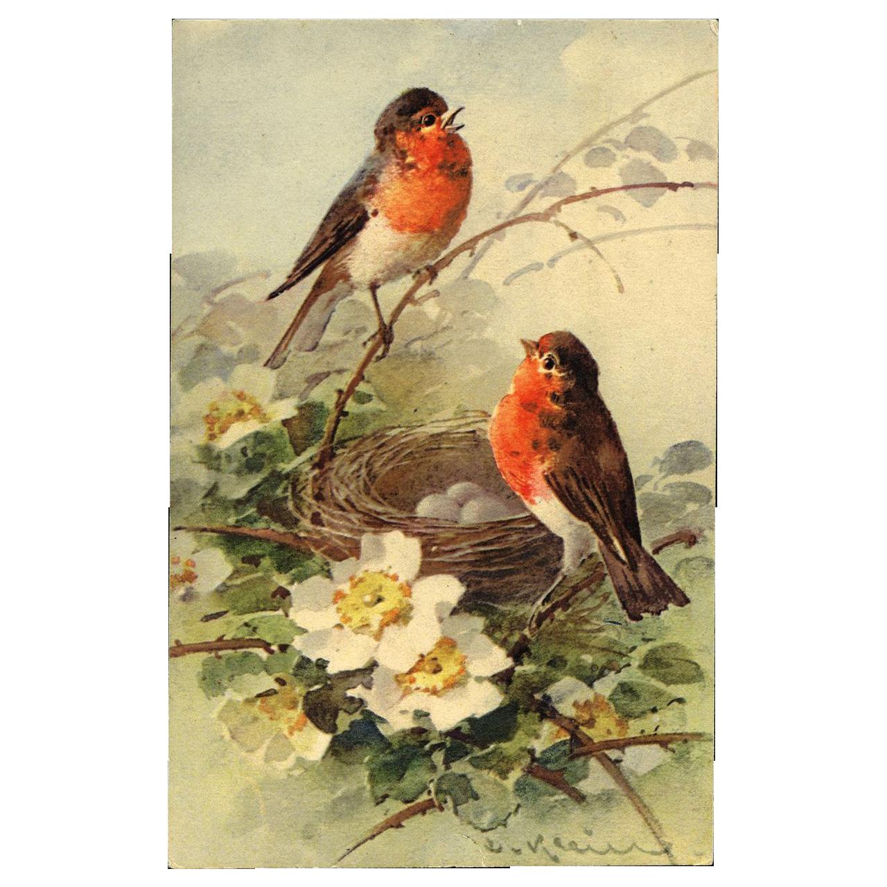 Artist Signed KLEIN Birds Nest Eggs 1911 Postcard LOVE note