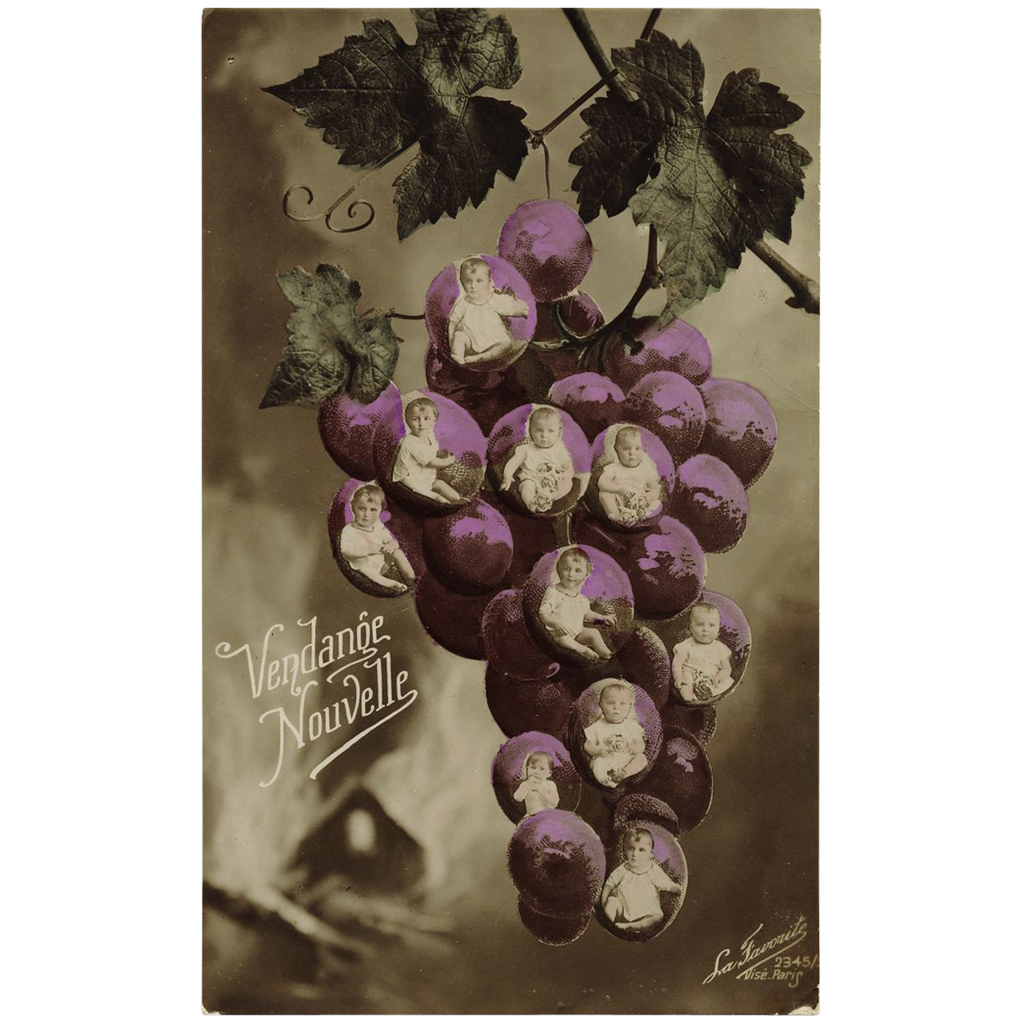 Multiple Babies and Toddlers Collaged into Grape Cluster French Postcard