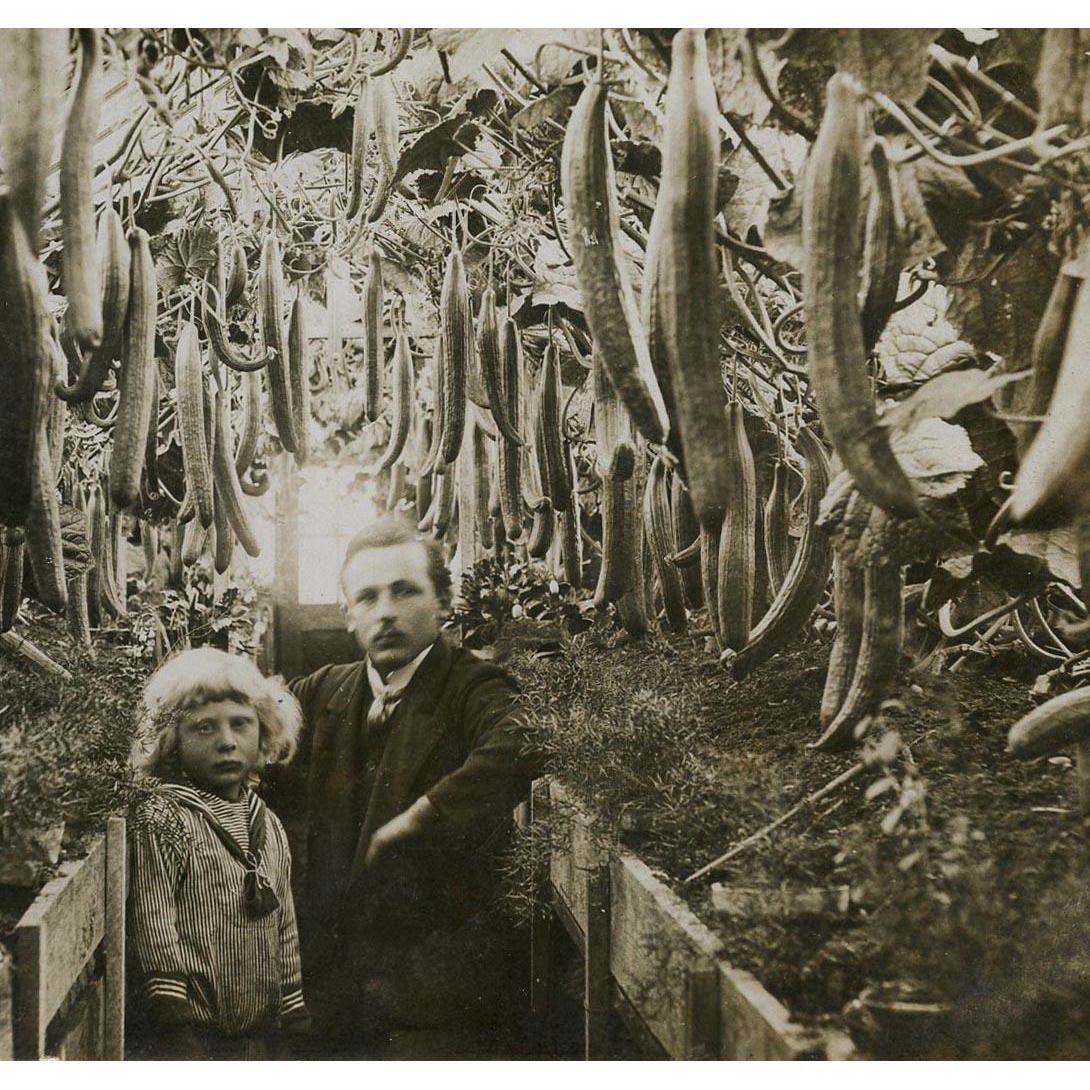 Mystery Photo Postcard Edwardian Man and Child in Cucumber Greenhouse